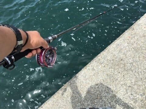 銀治郎と海将黒鯛
